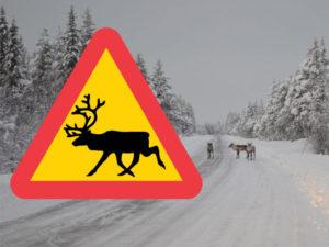 varning_ren