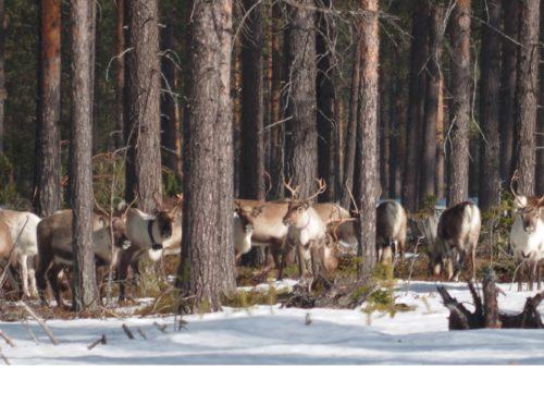 SSR:s remiss gällande Skogsstyrelsens förslag