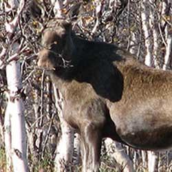 Remiss, förslag till ändrade jakttider