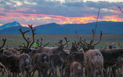 Gruvetableringens konsekvenser på världsarvet Laponia är inte tillräckligt utredda