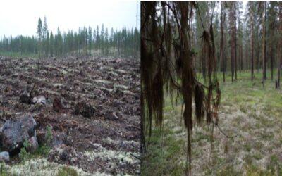 SSR kräver att Sveaskogs markförsäljningsprogram stoppas och att skogsbruksåtgärder endast får ske om berörda samebyar gett sitt samtycke.